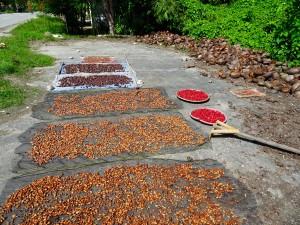 Séchage de cacao, fleurs et noix de coco